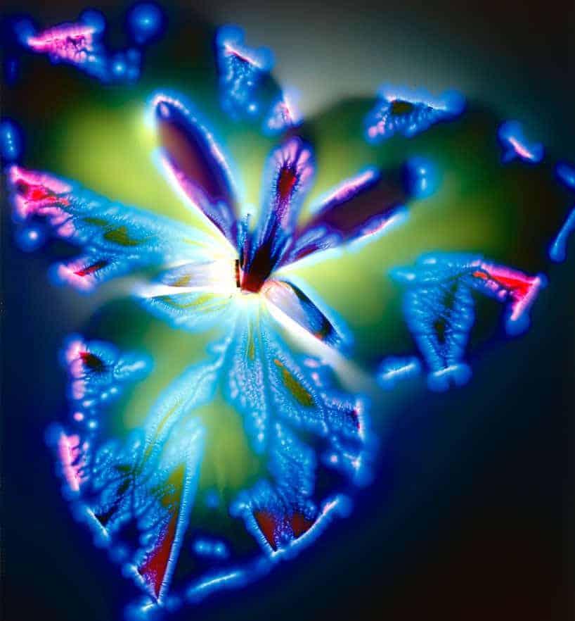 electrocuted flowers00