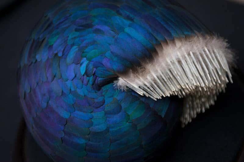 Sculpturen van veren door Kate MccGwire