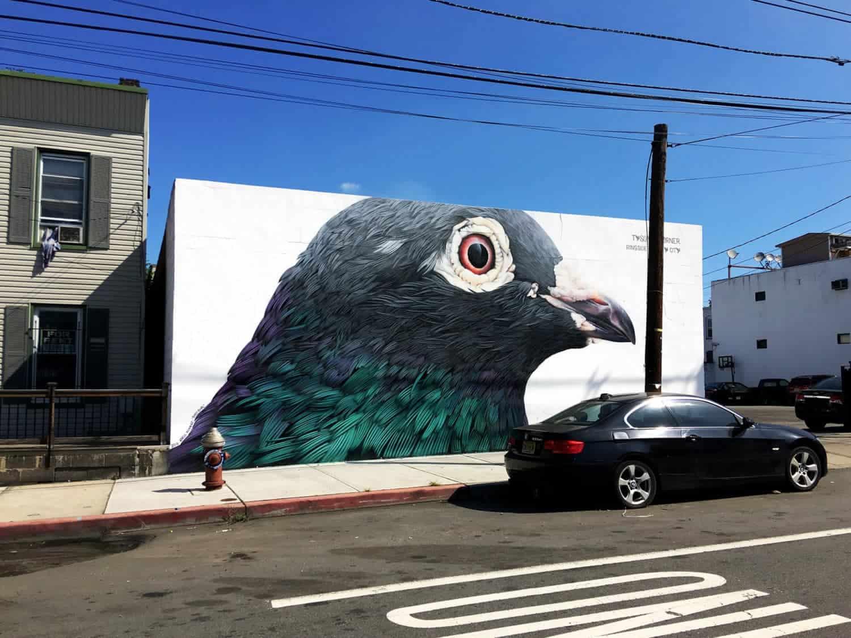 duiven in de stad