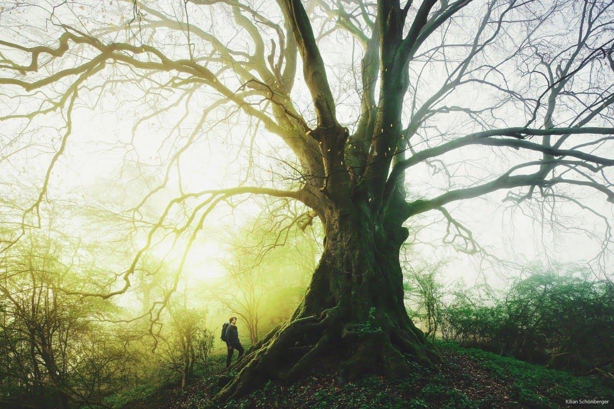 The Secret Beauty of Trees