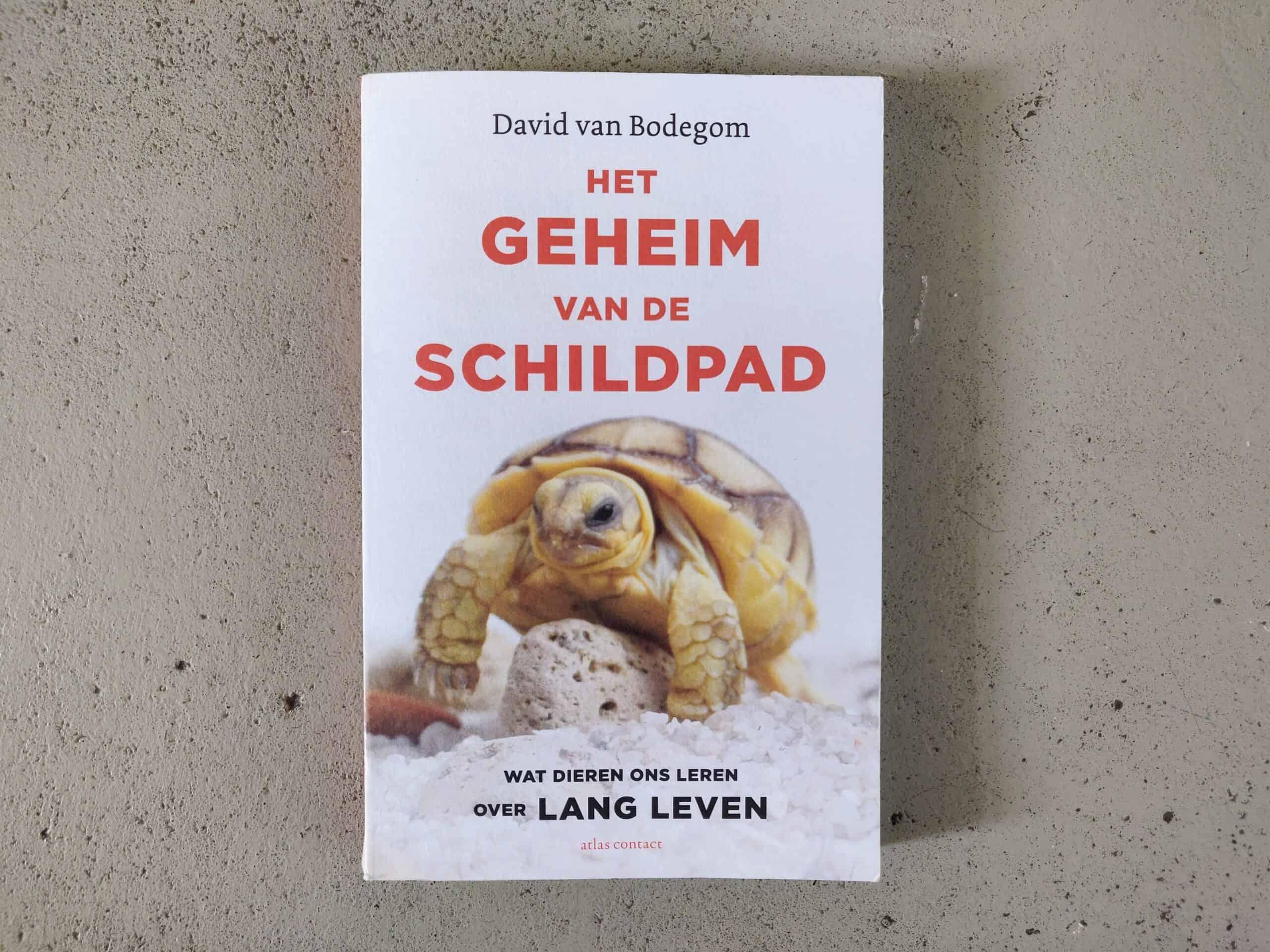 David van Bodegom - Het geheim van de schildpad