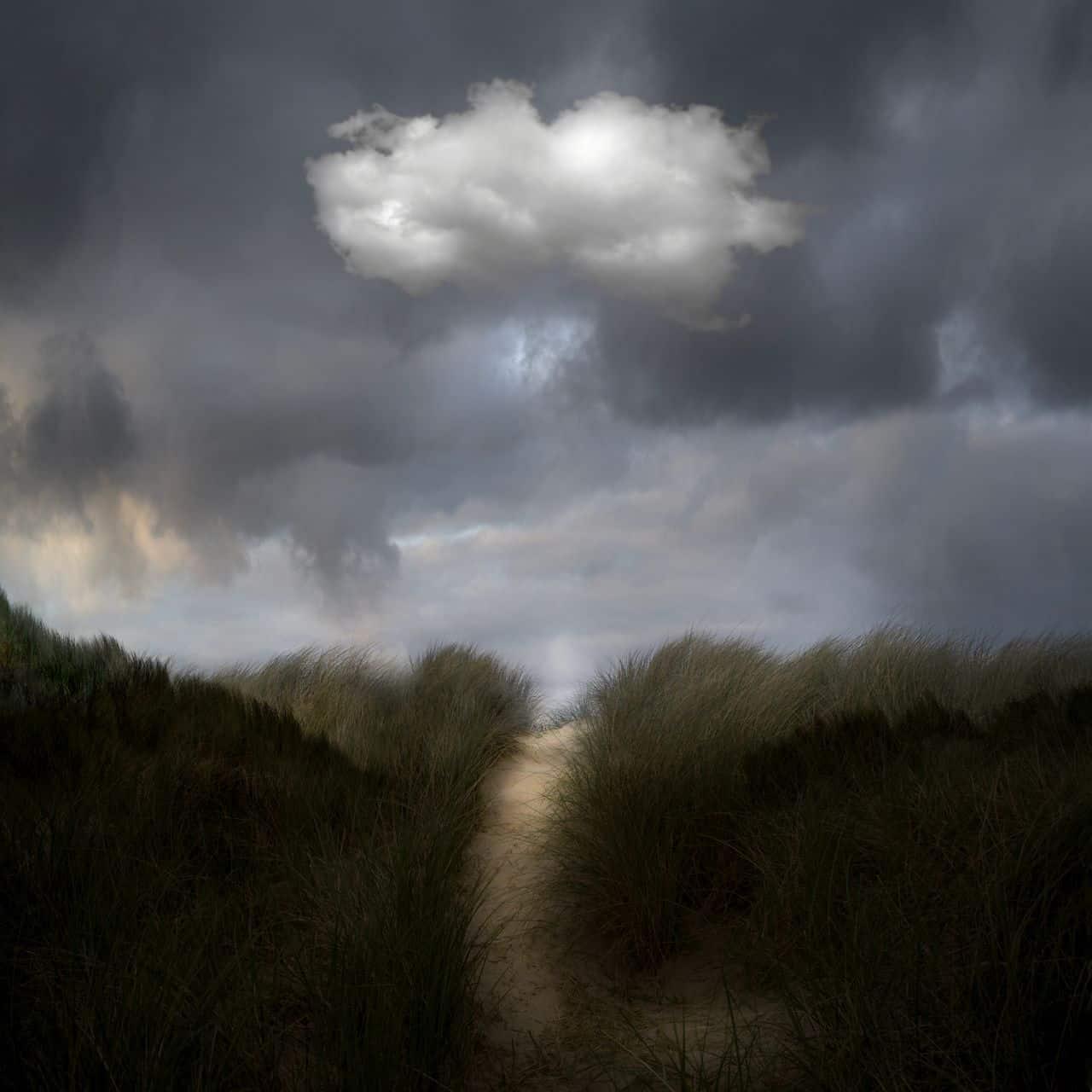 Saskia Boelsums - Landscapes