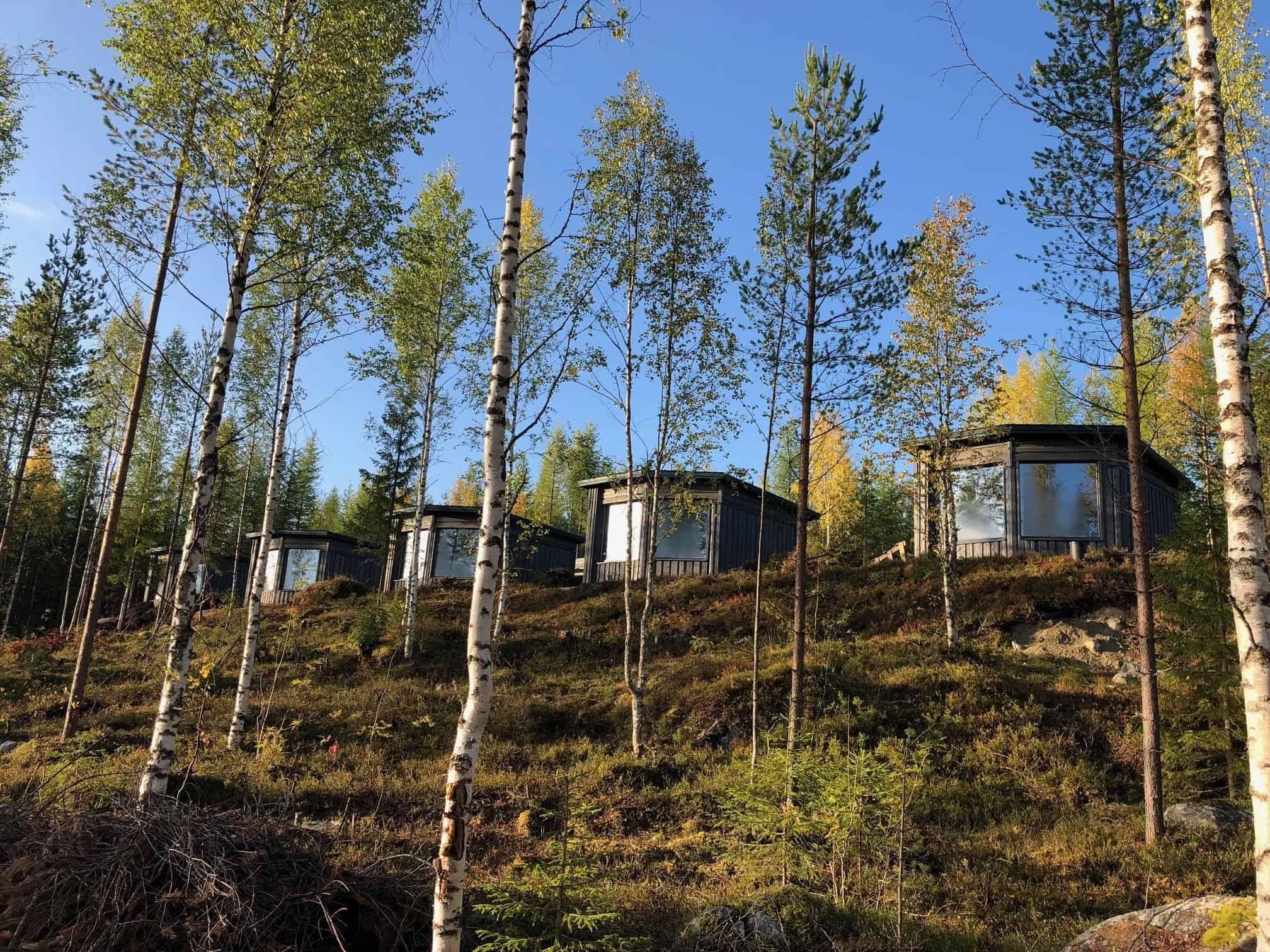Wild Taiga Finland