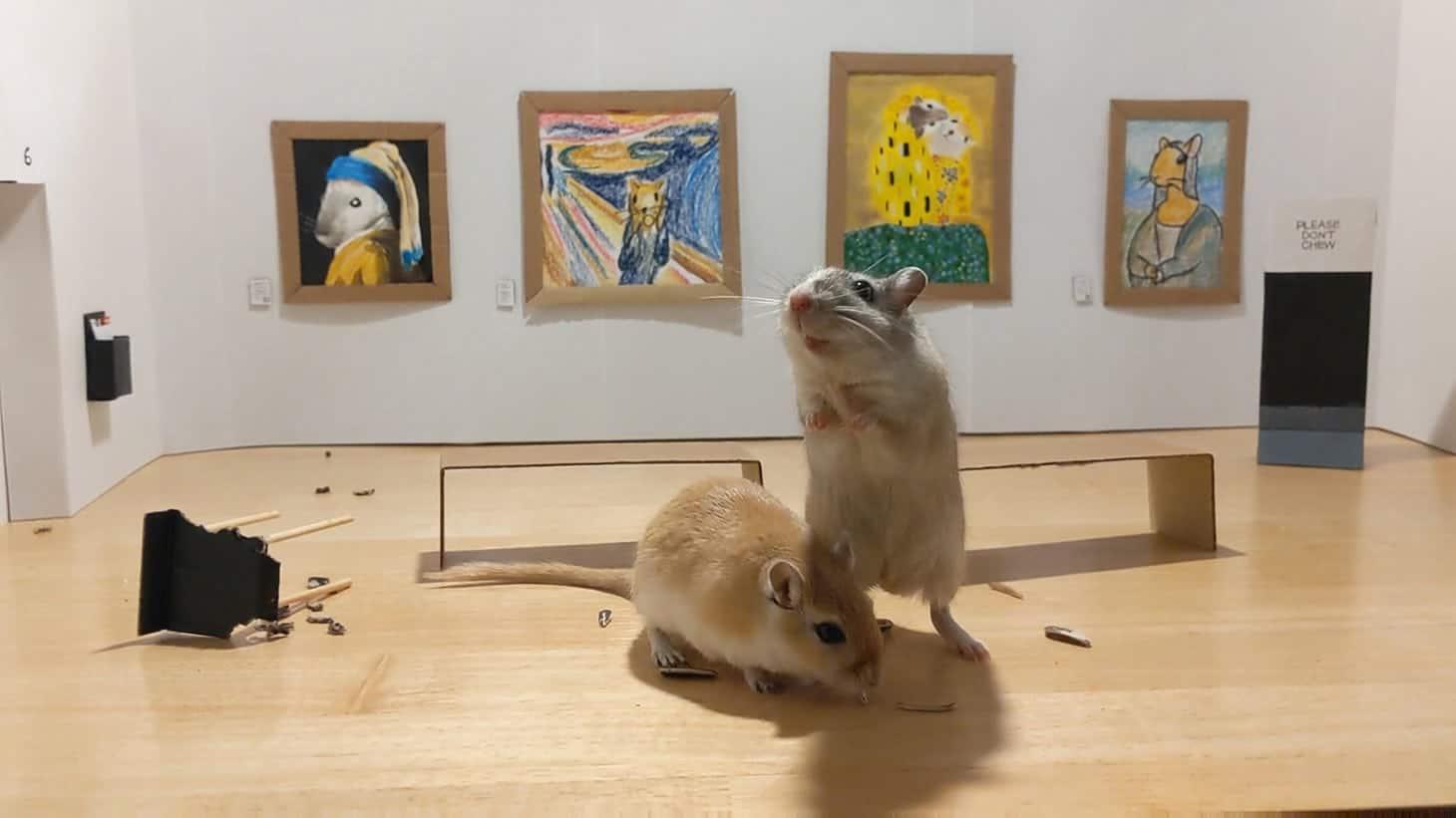 twee gerbils in een museum