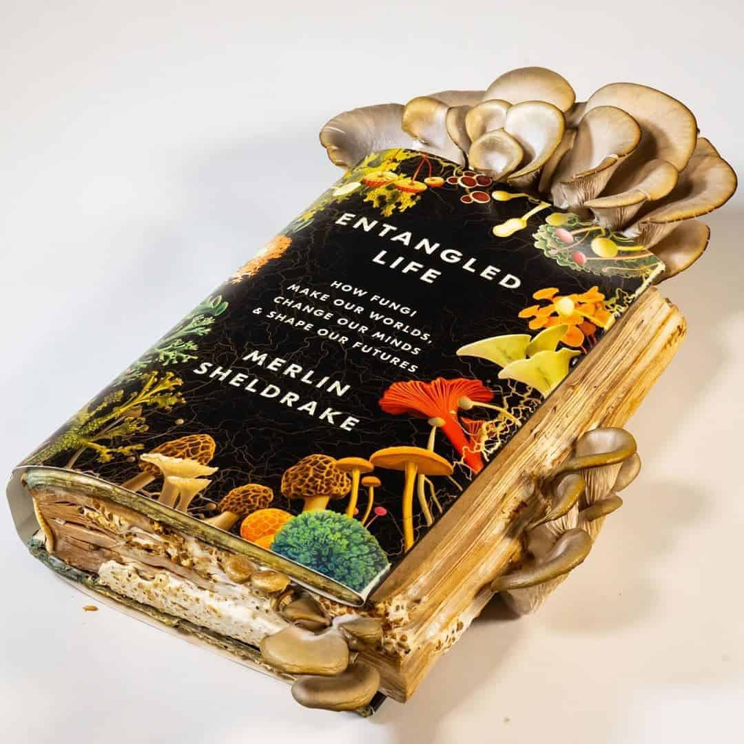 boek met paddenstoelen