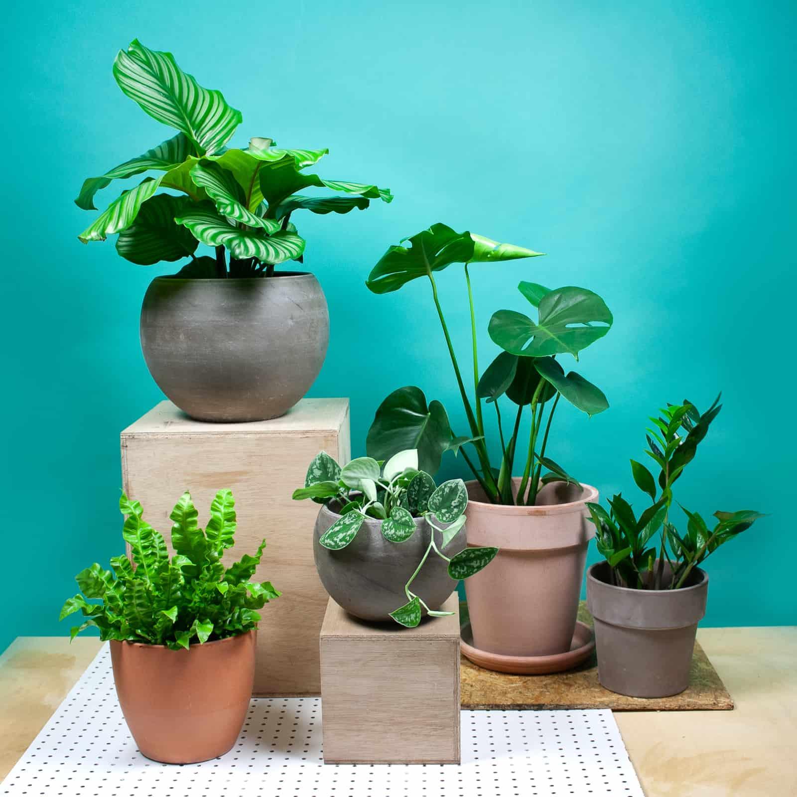 Sprinklr planten