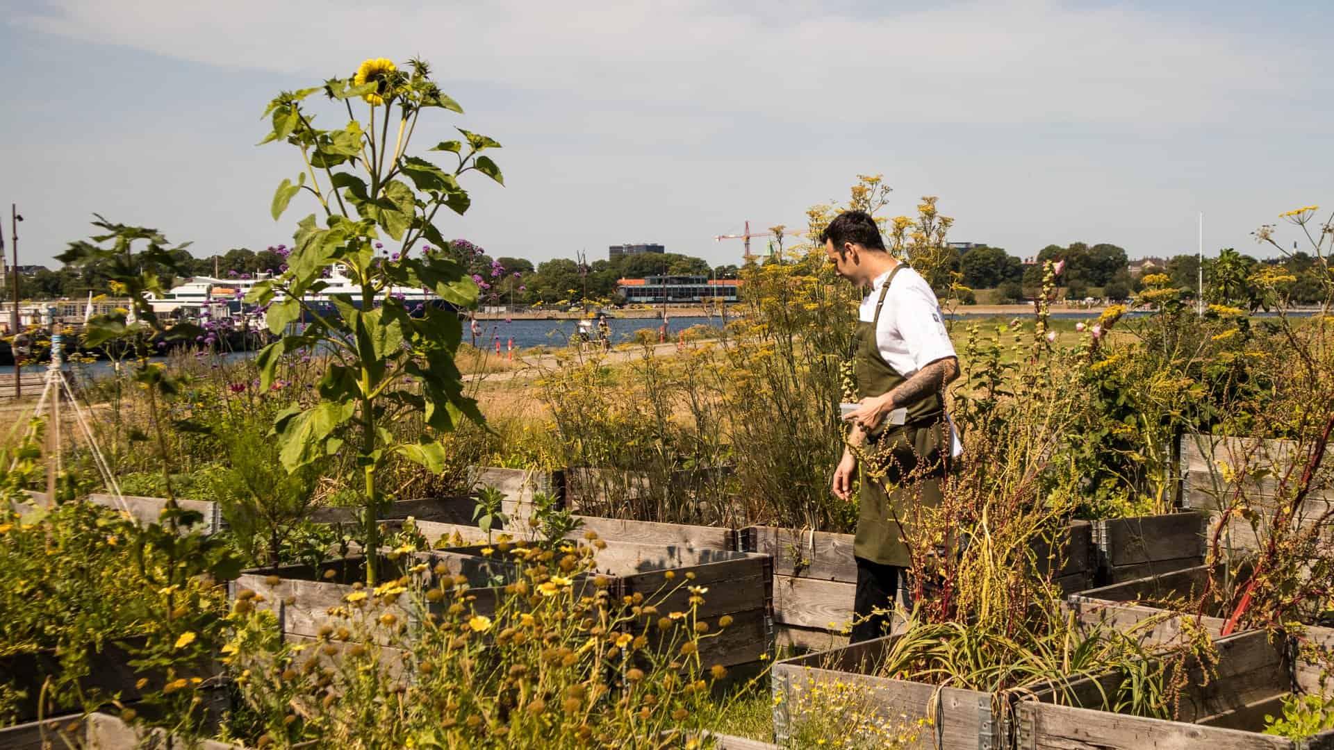 Chef Matthew Orlando van Amass in zijn tuin.