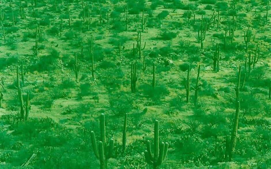 Landschap in 1 kleur