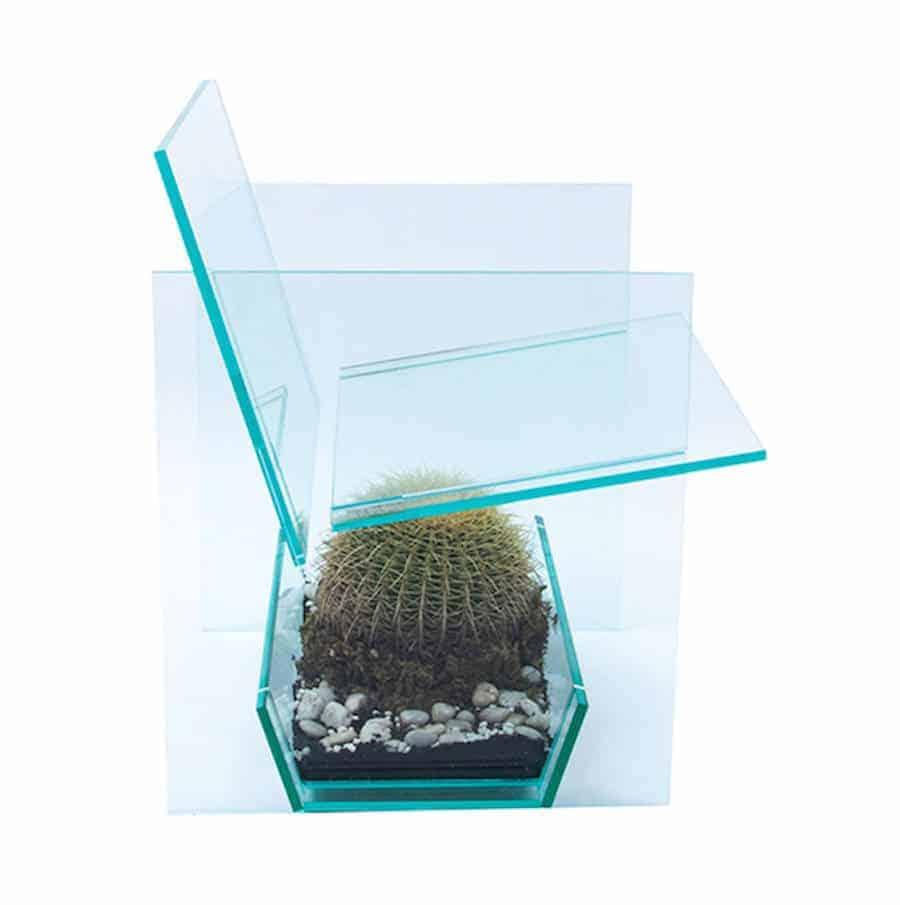 zitten op een cactus