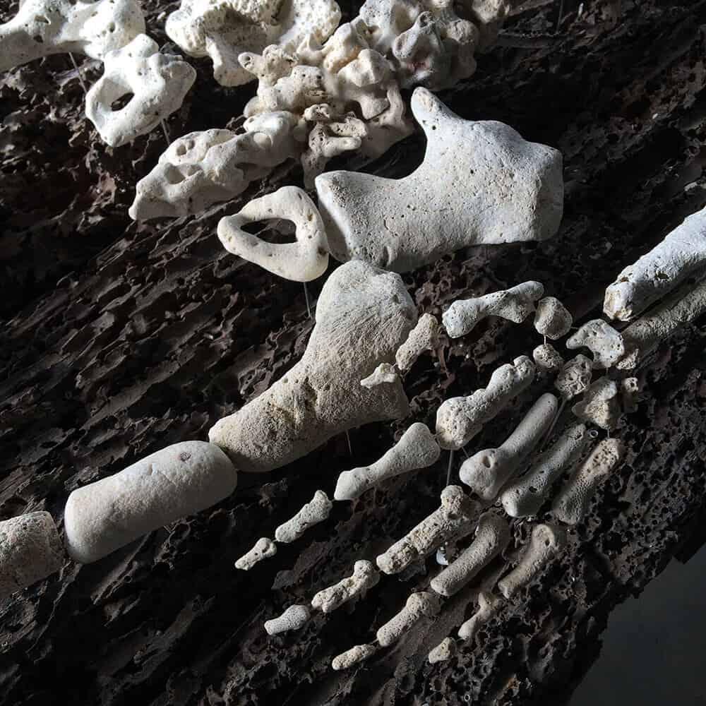 skelet van koraal