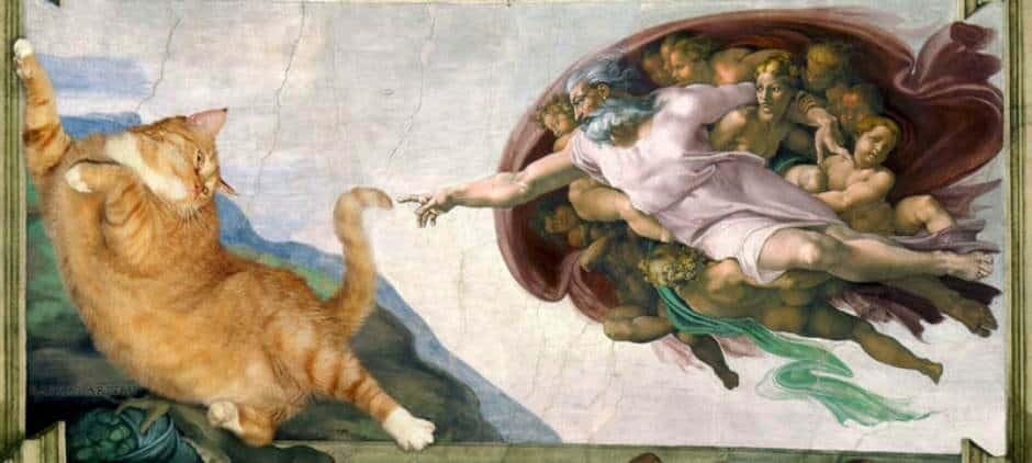 dikke kat