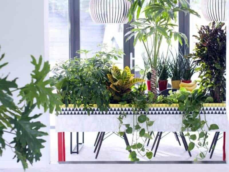 haal eens wat planten in huis
