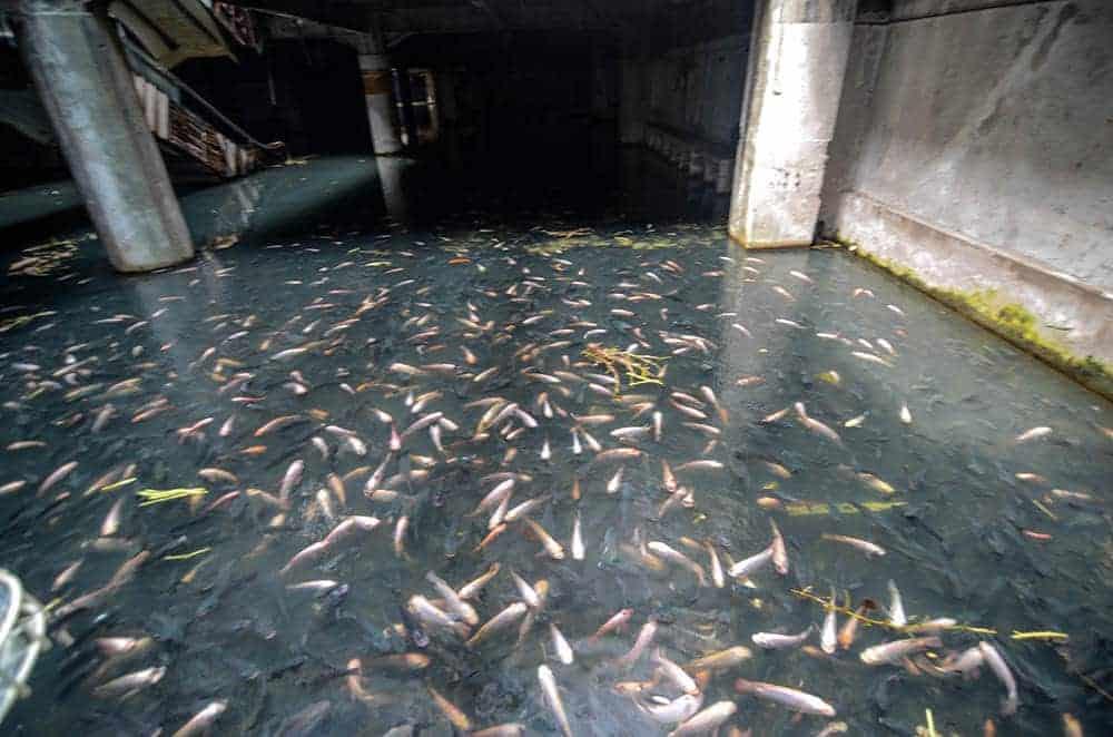 vissen in een winkelcentrum
