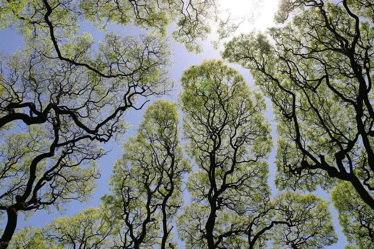 verlegen bomen