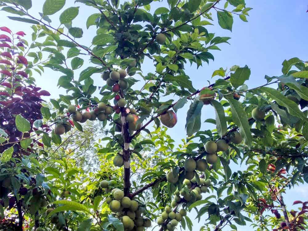 40 soorten fruit