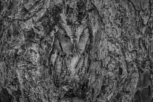 Goed gecamoufleerde uil in een holle boom