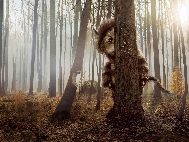 monster achter een boom